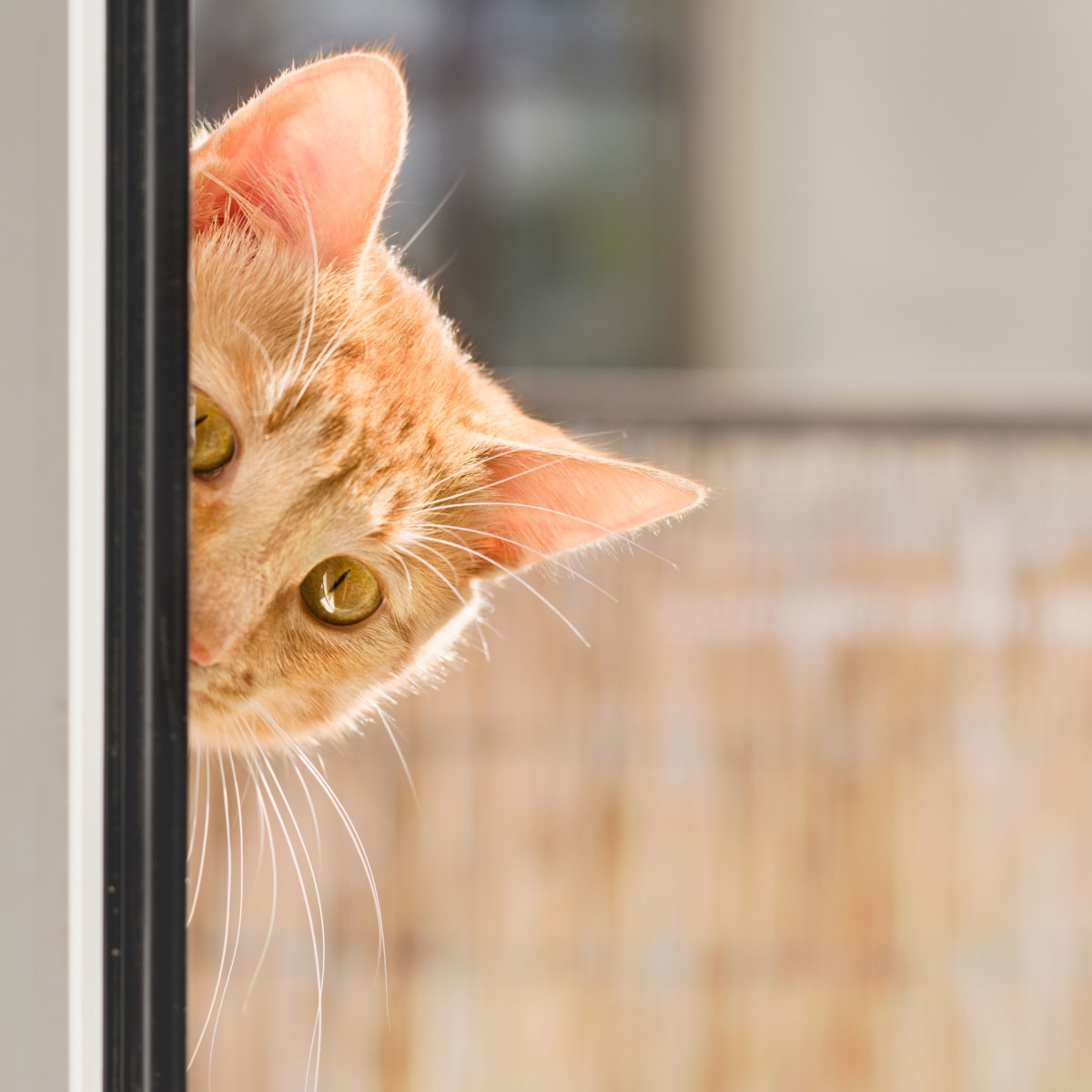 When The Cia Learned Cats Make Bad Spies History