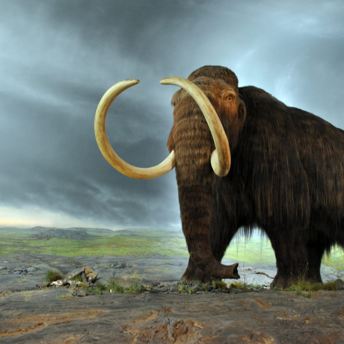 hith-woolly_mammoth-2.jpg