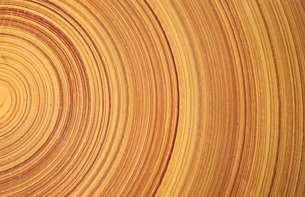 047ae36b210 Tree Rings Could Hold Key to Dating Ancient History - HISTORY