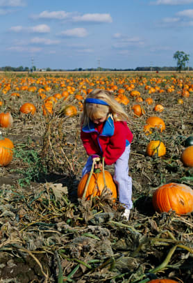 Young Girl Picking Pumpkins 2