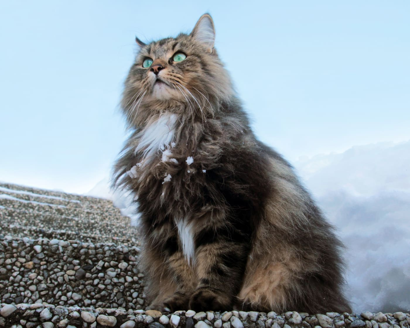 Cats of the Vikings