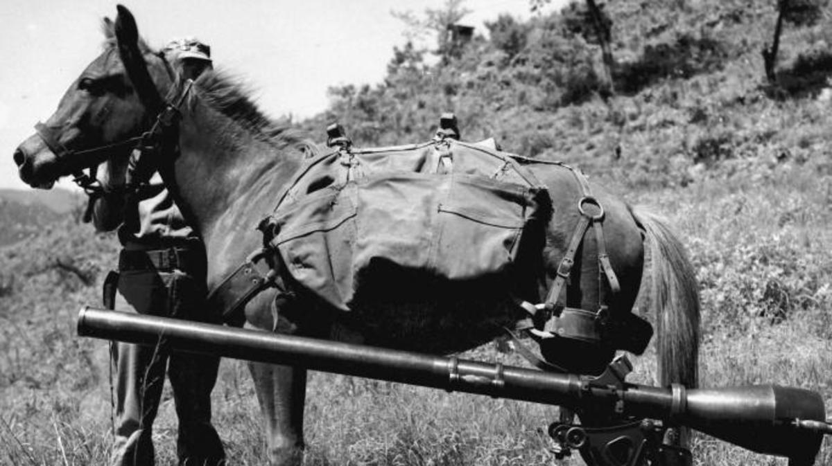 Sgt Reckless with a recoilless-rifle. (Credit: Archive PL/Alamy Stock Photo)