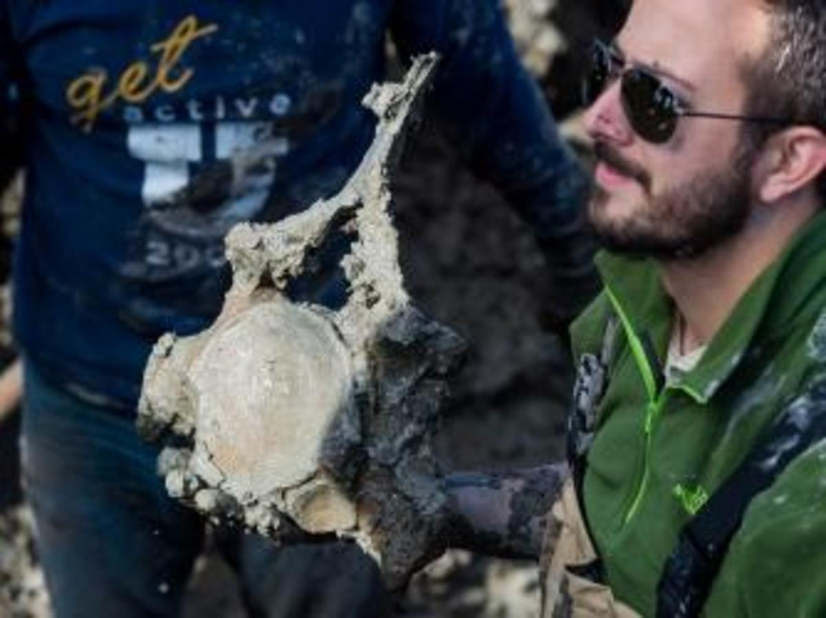 One of the mammoth vertebrae recovered during Thursday's dig. (Credit: Daryl Marshke/University of Michigan)