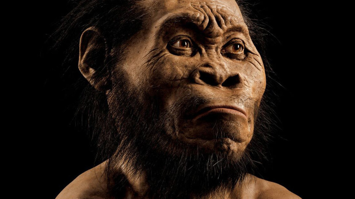 10 facts about the strange evolution of humanity