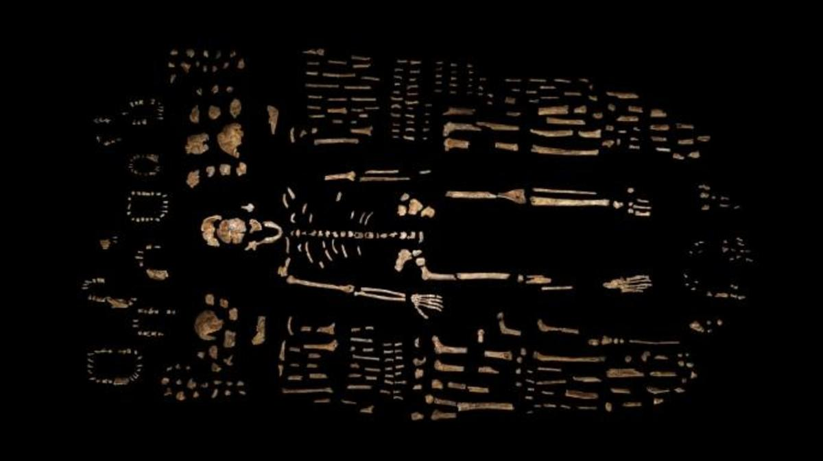 Composite skeleton of Homo naledi, surrounded by fossil fragments. (Credit: Robert Clark/National Geographic, Lee Berger/University of the Witwatersrand)