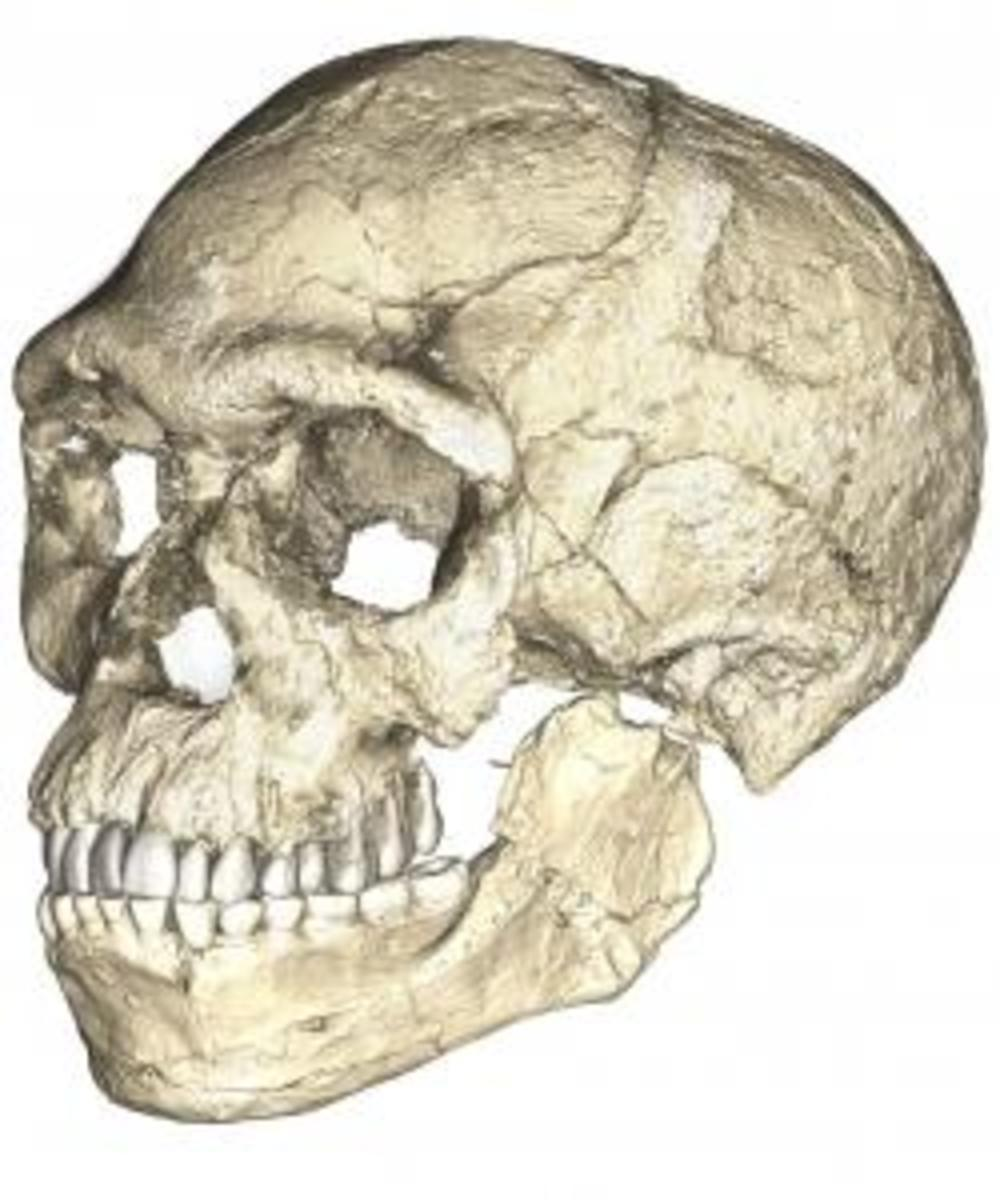A composite reconstruction of the earliest known Homo sapiens fossils from Jebel Irhoud (Morocco) based on micro computed tomographic scans of multiple original fossils. (Credit: Philipp Gunz, MPI EVA Leipzig, License: CC-BY-SA 2.0).
