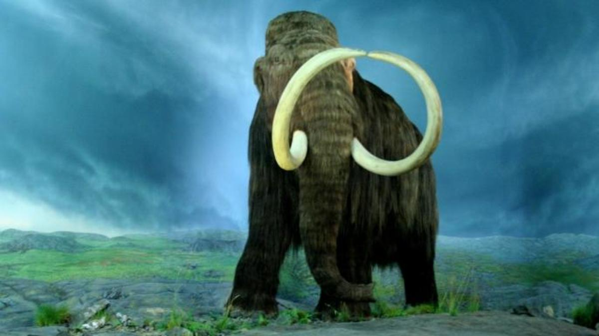 Woolly Mammoth. (Credit: Royal BC Museum, Victoria, British Columbia)