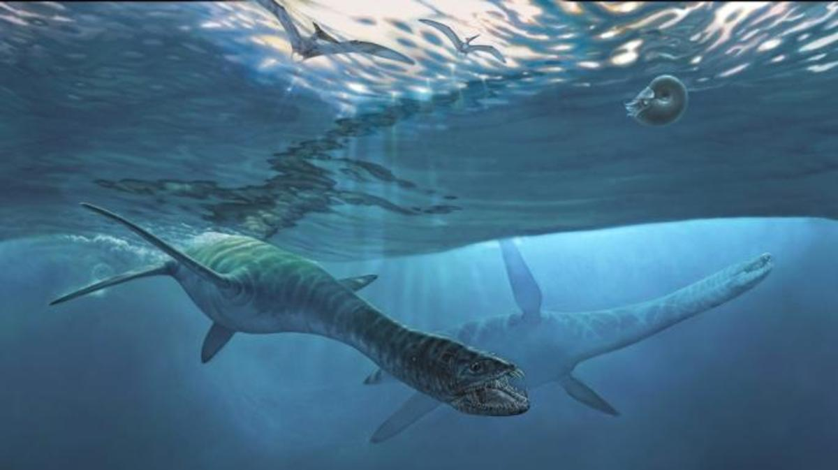 The newly named short-necked elasmosaur, Nakonanectes bradti, swims through an ancient sea in this artist's reconstruction. (Credit: Illustration by James Havens, @alaskapaleoproject)