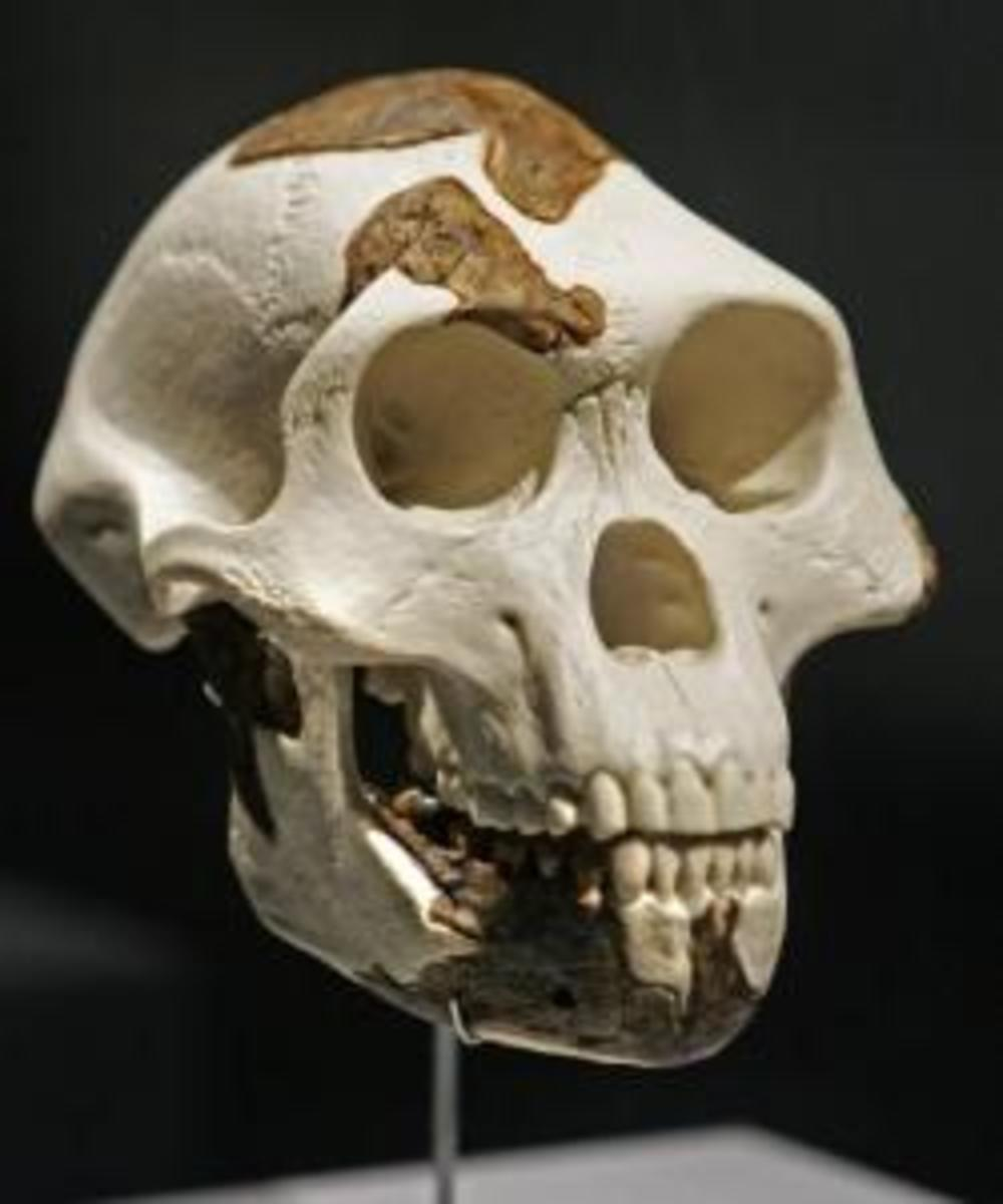 Lucy fossil dating