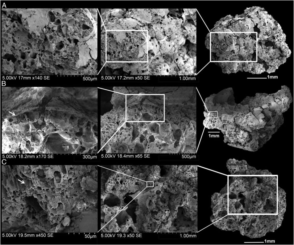 Microscope scans of the newly found bread-like remains. (Credit: Proceedings of the National Academy of Sciences)