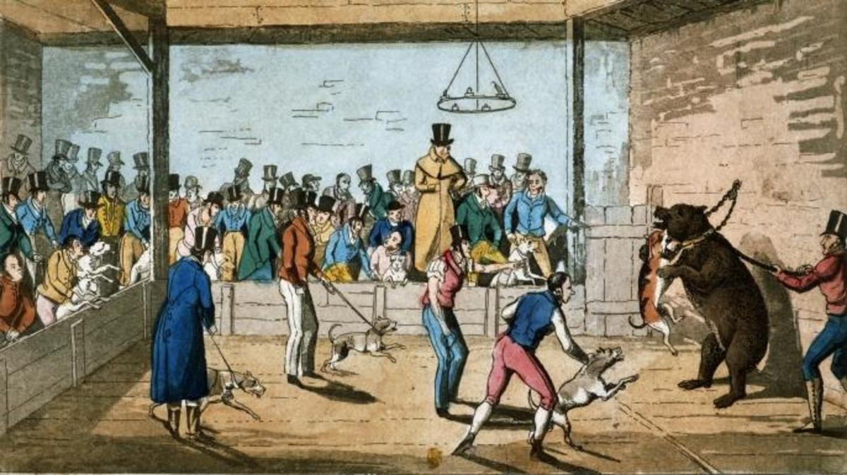 Bear baiting in London in the 1820s. (Credit: Hulton-Deutsch Collection / Getty Images)