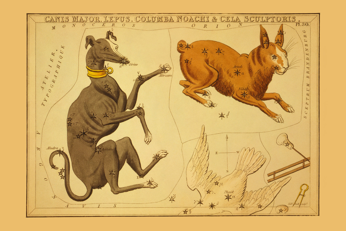 Dog Days of Summer: Canis Major