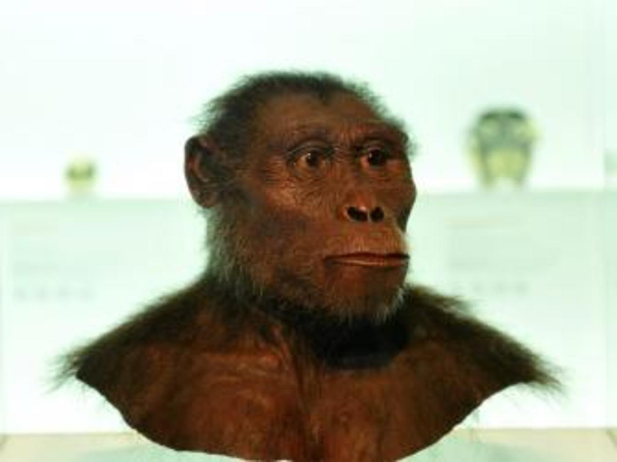 Model of the early hominin Lucy. (Credit: Schöning / ullstein bild / Getty Images)