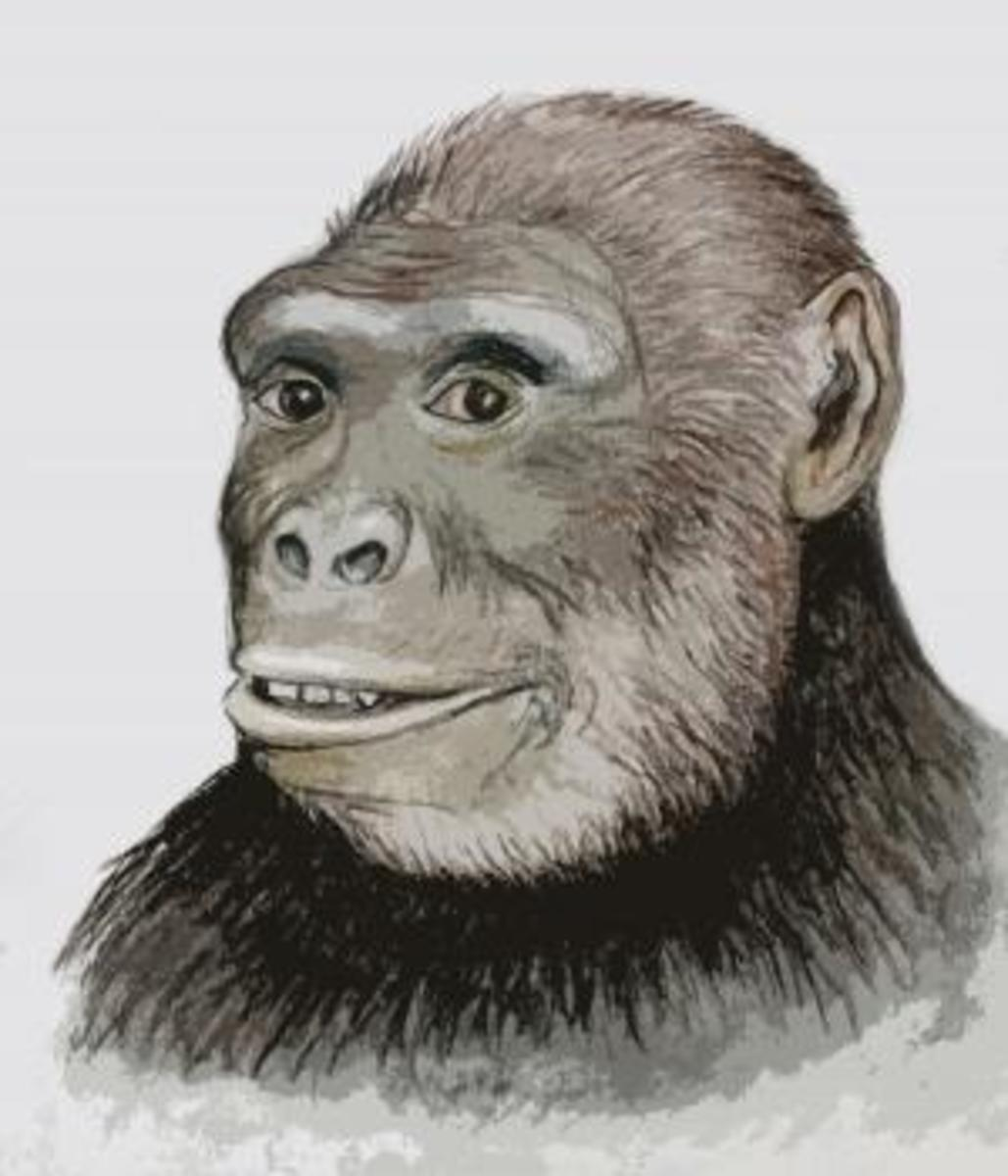 head sketch is by Assen Ignatov of the Bulgarian National Museum of Natural History