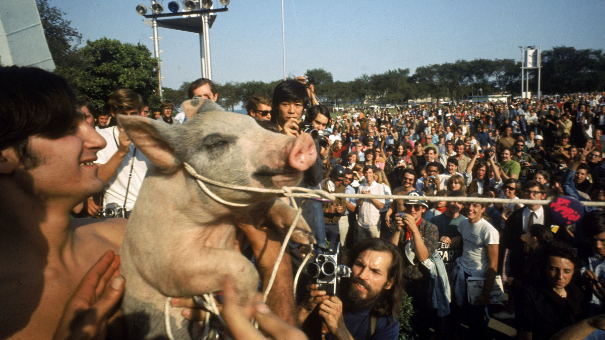 Yippies Parading Their Presidential Candidate Pigasus The Pig During 1968 Democratic National Convention