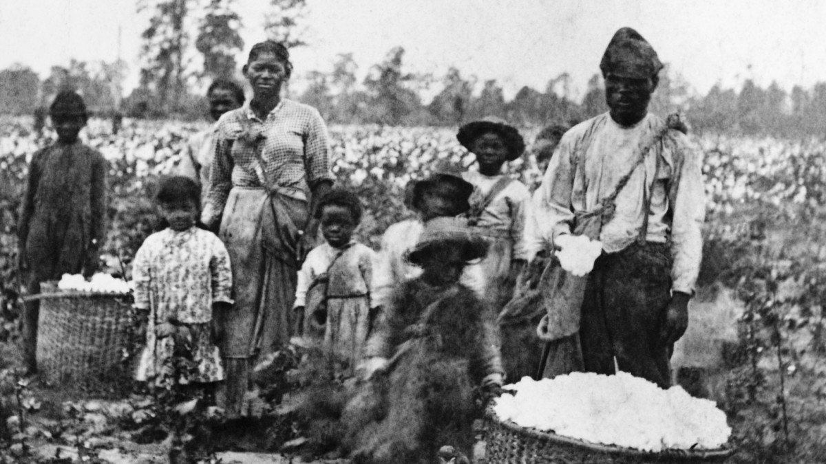 Slave family picking cotton in the fields near Savannah, circa 1860s. (Credit: Bettmann Archives/Getty Images)