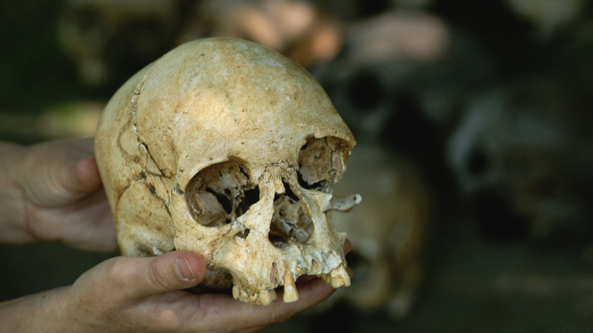 The Luzia skull, the oldest skull ever found in the Americas.