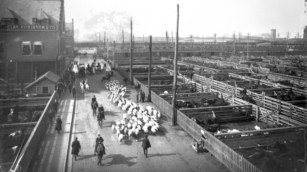 Chicago's Union Stock Yard