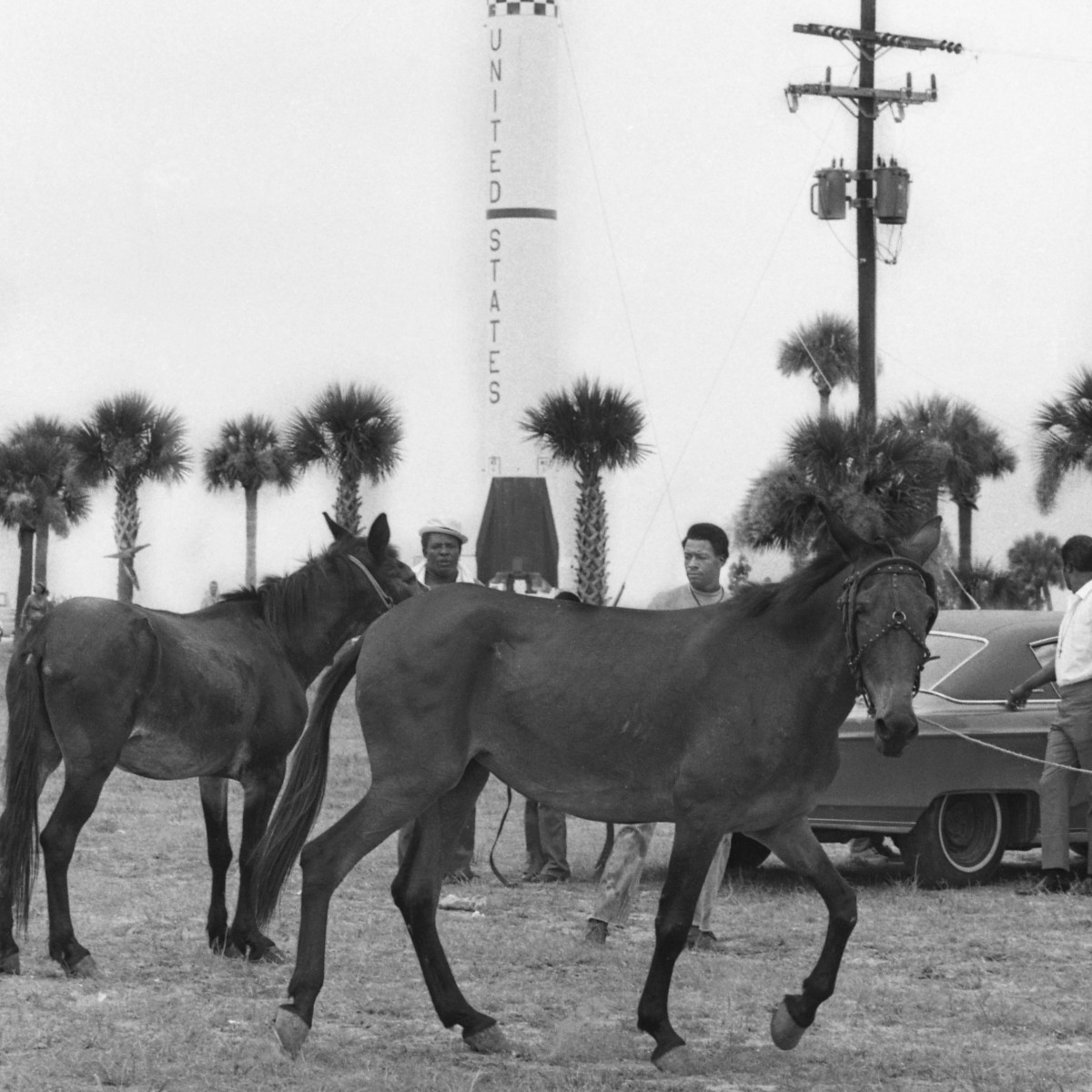 The Southern Christian Leadership Conference's Poor People's marchers line up mules near the gates to the Kennedy Space Center on July 15, 1969.