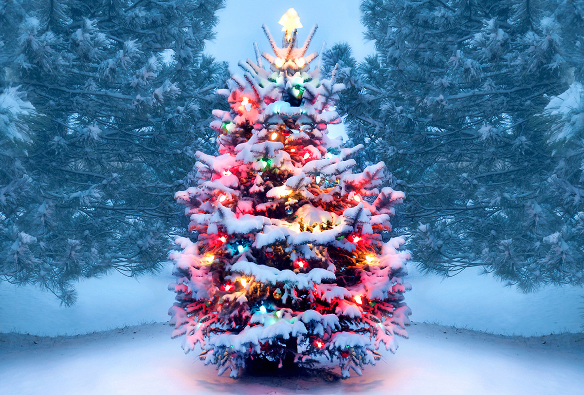 Christmas Traditions: Christmas Trees
