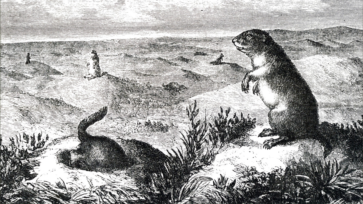 "Lewis and Clark came upon prairie dogs in 1804 and described them as ""little animals"" that ""make a whistling noise."""