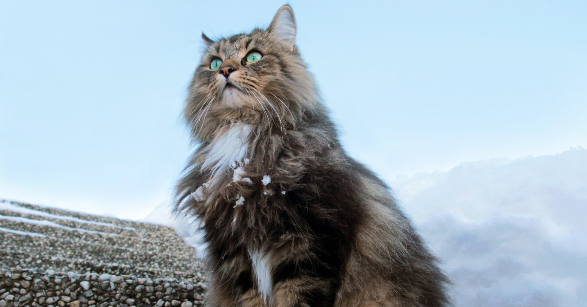 How Vikings Cats Were Different To Today S Cats History