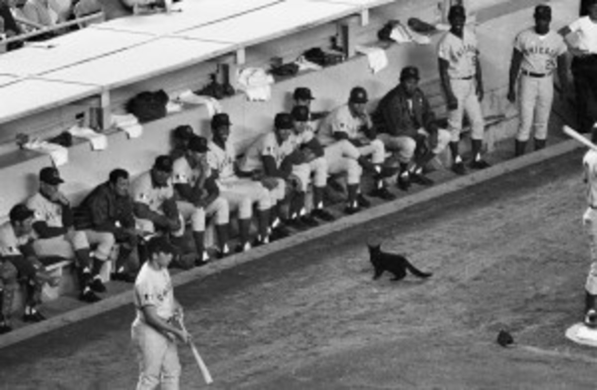 Black cat stopped the Cubs vs. Mets game momentarily in 1969.