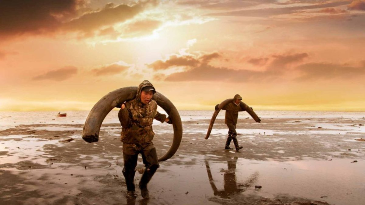 Are Scientists on the Verge of Resurrecting the Woolly Mammoth?