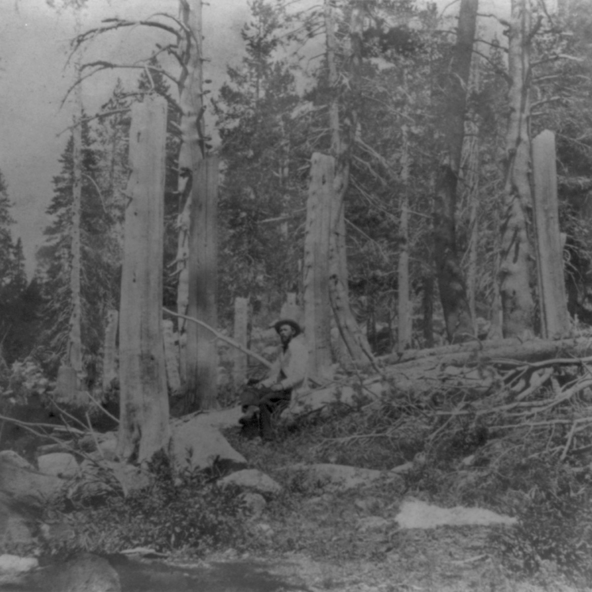 Stumps of trees cut by the Donner Party, seen in Summit Valley circa 1866.