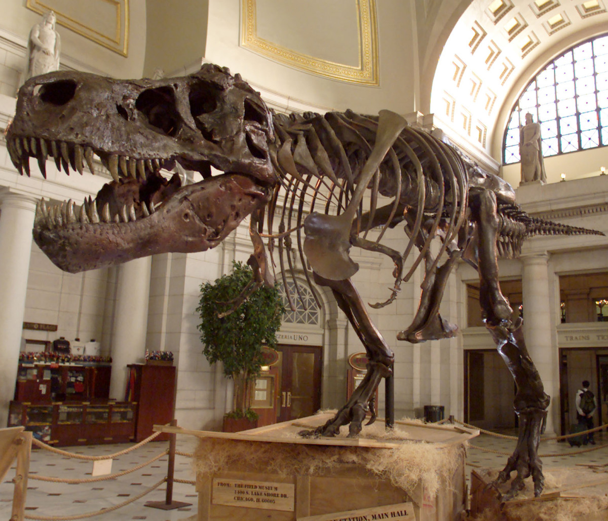 The T-Rex skeleton known as Sue on display in Washington D.C.'s Union Station in 2000.