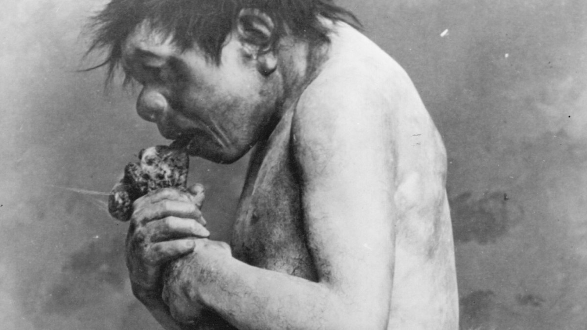 A reconstruction of a pre-historic cave man, at the Chicago Field Museum, eating meat.