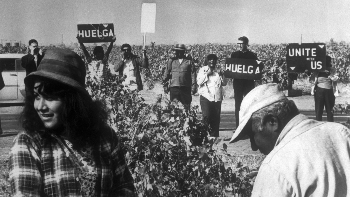 "Pickets gathering at edge of a grape field urging workers to join strike. The word ""Huelga"" is Spanish for strike."