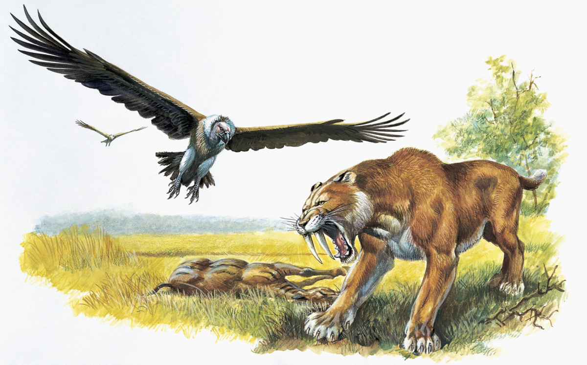 A saber-toothed tiger hunting its prey.