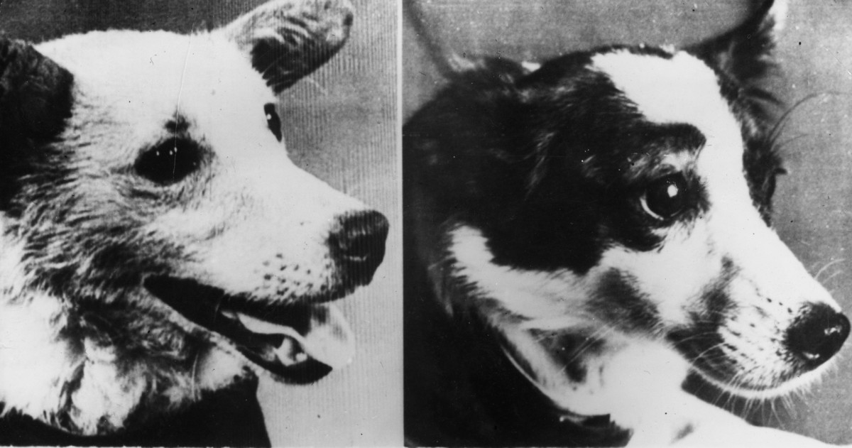 Soviet Space Dogs Belka and Strelka