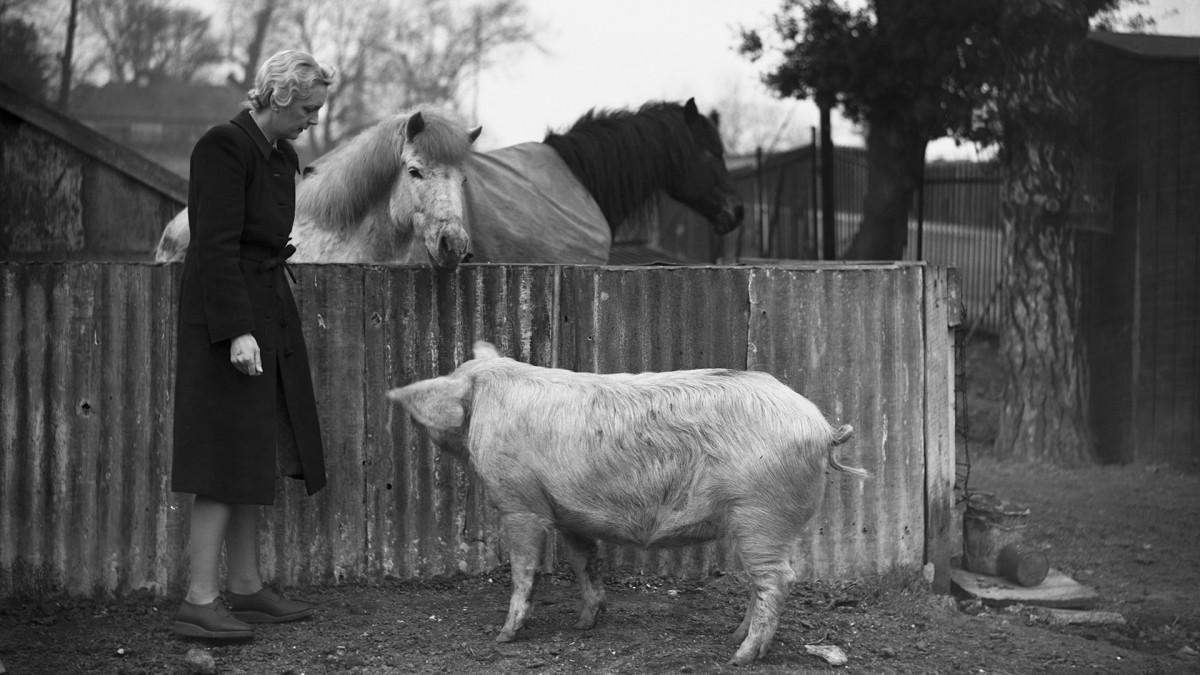 Nora Cleather visits a farm set up to produce food for the war effort, Wimbledon, London, 1st April 1942. The site was formerly the spectators' car park at the the All England Lawn Tennis and Croquet Club.