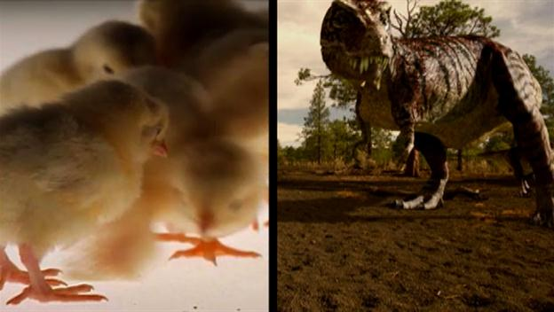Jurassic Fight Club: Chicken and T-Rex Link